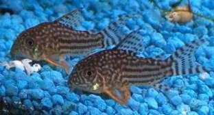 poissons et autres animaux aquatiques